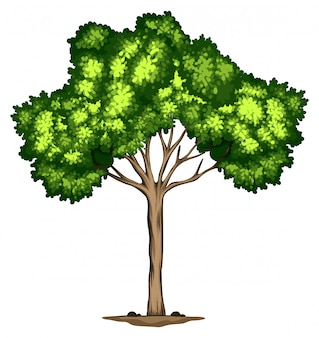 Um desenho de árvore no fundo branco