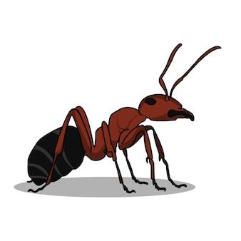 Um desenho de ilustração de formiga vermelha grande e muito detalhado