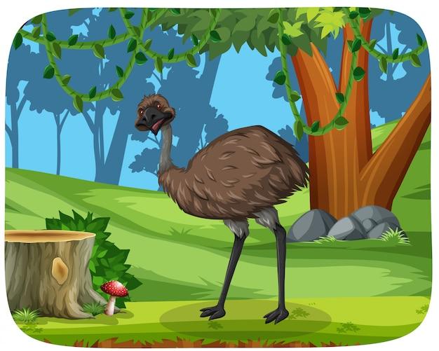 Um ema na floresta