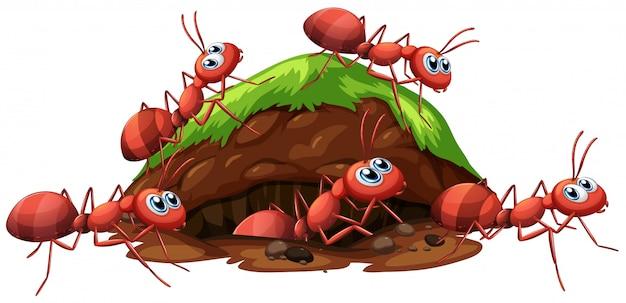 Um fogo vermelho formigas e buraco