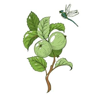 Um galho com maçãs verdes e uma libélula voadora