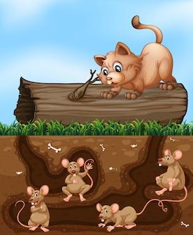 Um gato à espera de rato no buraco