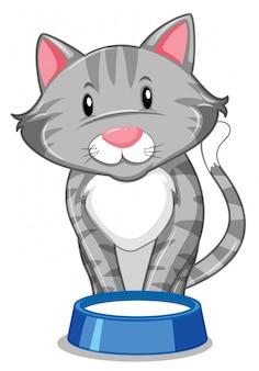 Um gato cinzento com bandeja de comida