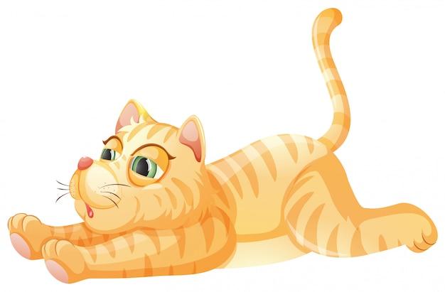 Um gato preguiçoso no fundo whiye