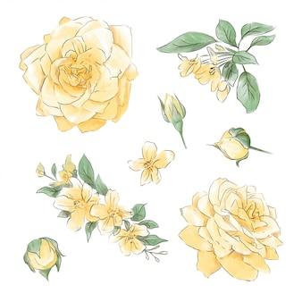 Um grande conjunto de aquarelas oferece rosas de super qualidade.