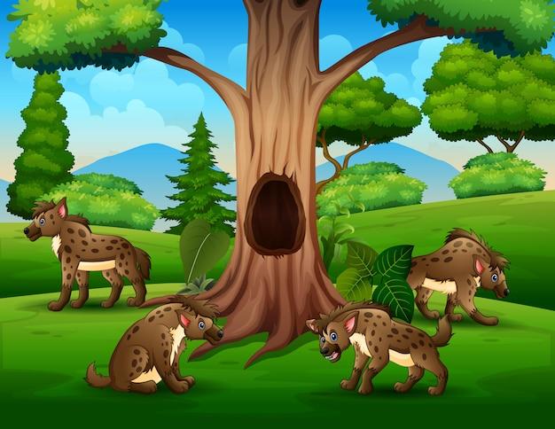 Um grupo de hienas tocando sob a paisagem da árvore oca