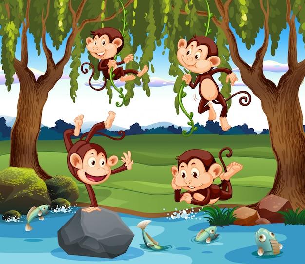 Um grupo de macaco na natureza