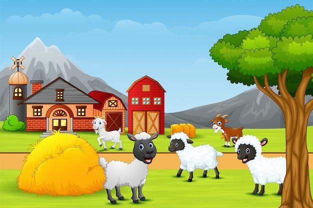 Um grupo de ovelhas na paisagem da fazenda
