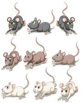 Um grupo de ratos