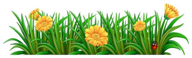 Um jardim com flores desabrochando