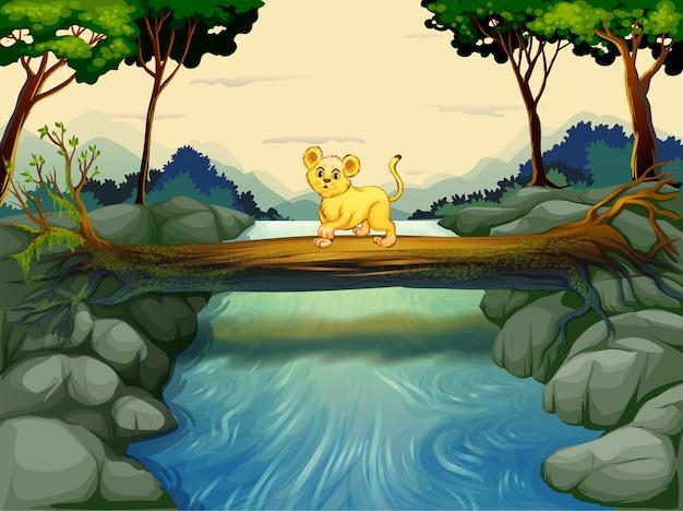 Um jovem tigre atravessando o rio