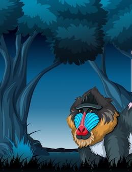 Um mandril na floresta escura