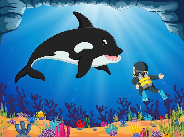 Um mergulhador corajoso está olhando o grande golfinho sob o oceano azul