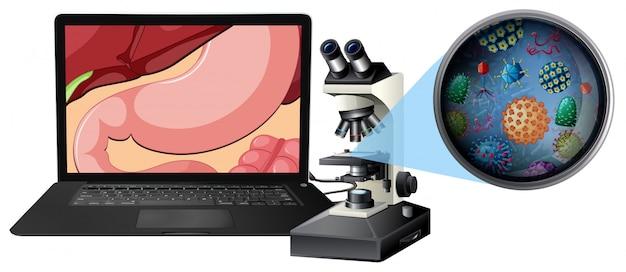 Um microscópio e bactérias do estômago