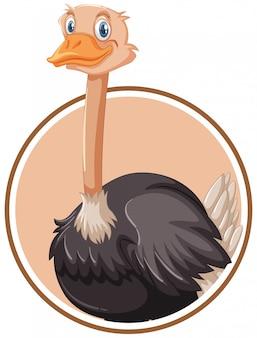 Um modelo de etiqueta de avestruz