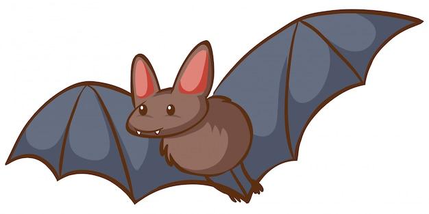 Um morcego voando no fundo branco