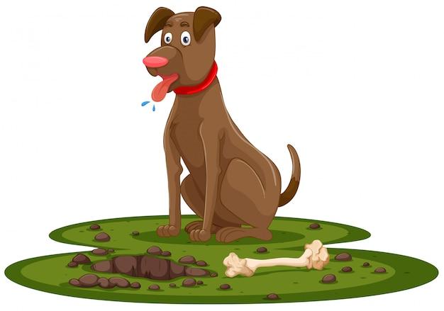 Um osso de escavação do cão