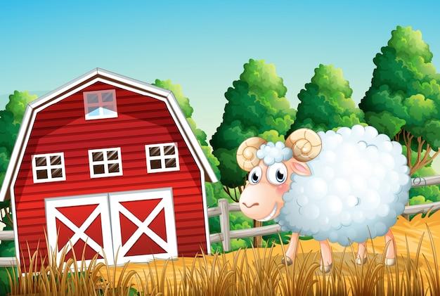Um, ovelha, em, terra cultivada