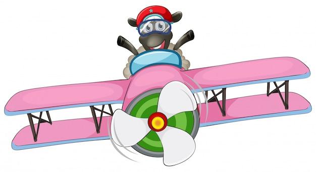 Um, ovelha, montando, avião