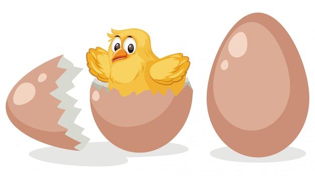 Um ovo de incubação