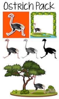 Um pacote de avestruz bonito