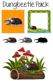 Um pacote de escaravelho