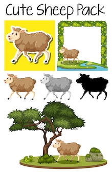 Um pacote de ovelhas