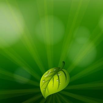Um papel de parede de cor verde com uma folha