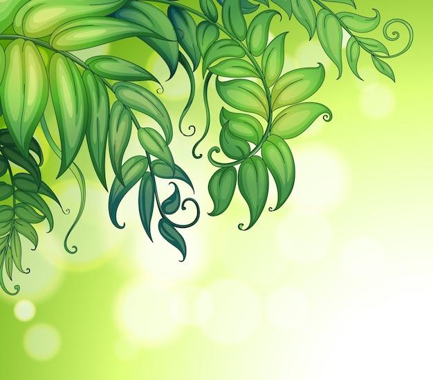 Um papel especial com folhas verdes