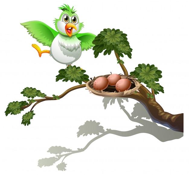 Um pássaro bonito no galho de uma árvore com um ninho