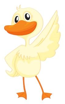 Um pato feliz
