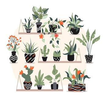 Um pequeno e bonito jardim em casa onde um monte de plantas tropicais exóticas com folhas e flores em vasos pretos estão colocados na grande parede rosa