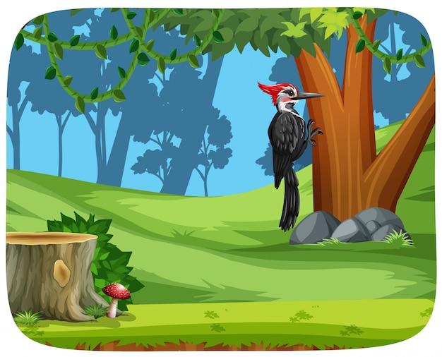 Um, pica pau, pássaro, em, floresta