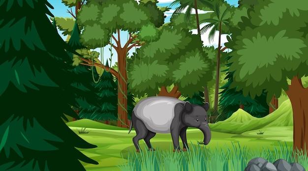 Um porco-da-terra em cena de floresta com muitas árvores