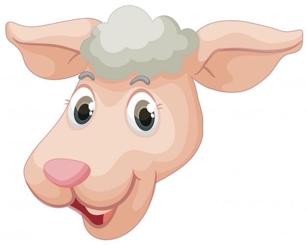 Um rosto de ovelhas