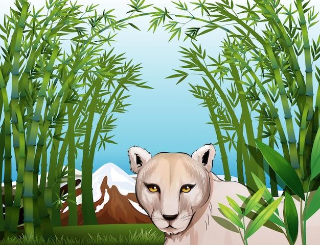 Um tigre assustador na floresta de bambu