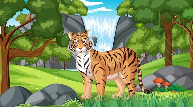 Um tigre na floresta ou cenário de floresta tropical com muitas árvores Vetor Premium