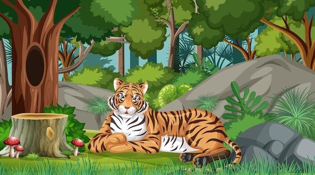 Um tigre na floresta ou cenário de floresta tropical com muitas árvores
