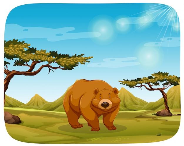 Um urso na cena da natureza