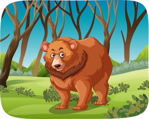 Um urso pardo na floresta