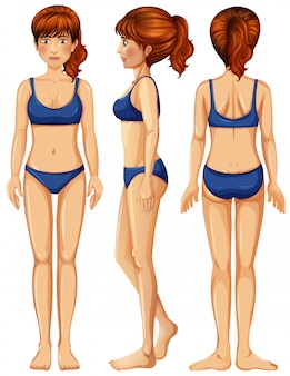 Um vetor de corpo feminino