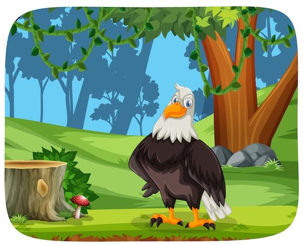 Uma águia no fundo da natureza