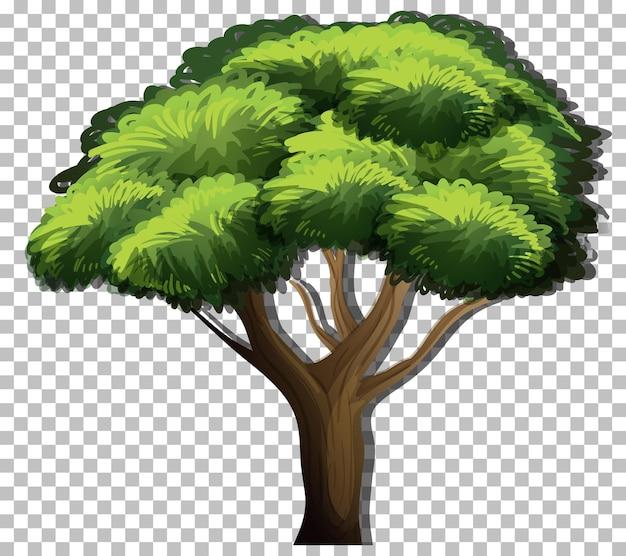Uma árvore com folhas verdes em fundo transparente