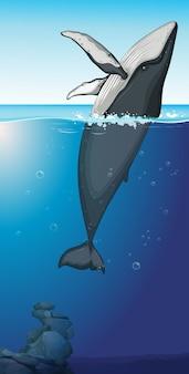 Uma baleia jubarte no oceano