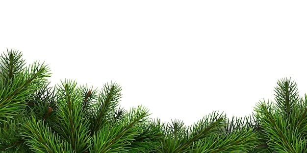 Uma borda de ramos de abeto realistas. plano de fundo para o natal