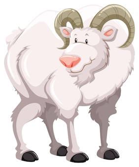 Uma cabra