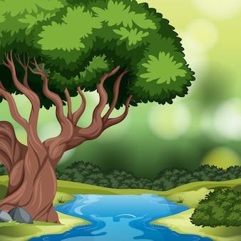 Uma cena de fundo da floresta