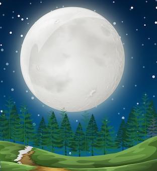 Uma cena noturna simples da floresta