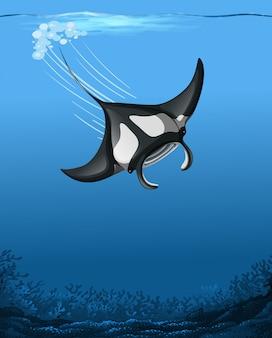 Uma cena subaquática de manta ray
