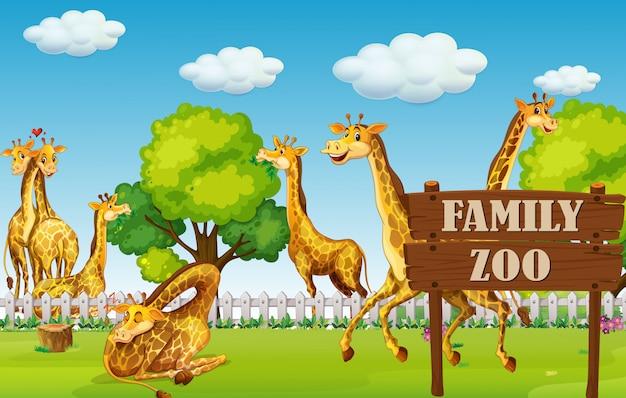 Uma família de girafas no zoológico